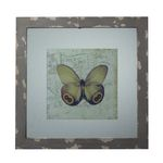 Distressed Grey Picture Frame With Butterfly Print 128-1028