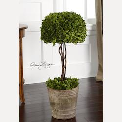 Green / Mossy Stone Preserved Boxwood Tree Topiary