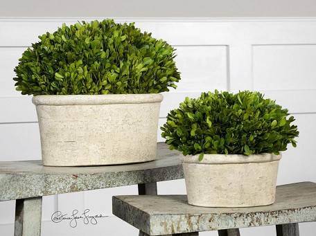 Preserved Boxwood Collection Oval Domes (Set of 2) 60107