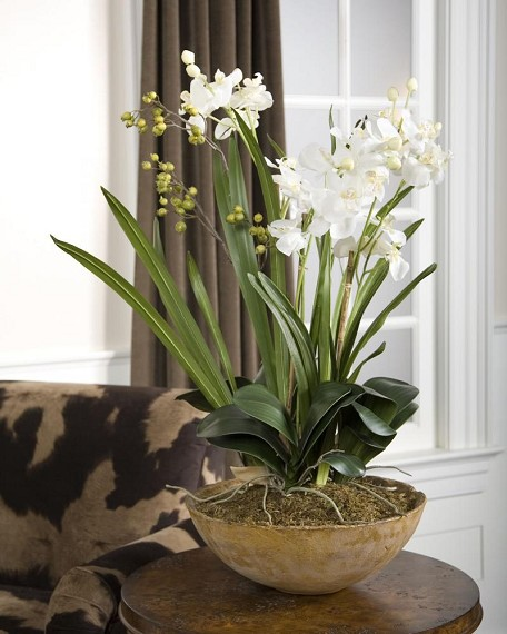 Natural Brown / White Hand Painted Dish Planter from the Moth Orchid Planter Collection