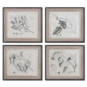 Sepia Leaf Study Collection Wall Art, (Set of 4) 51073