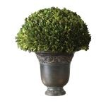 Preserved Boxwood Collection Globe 60092