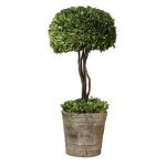 Preserved Boxwood Collection Tree Topiary 60095
