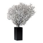 Natural Sea Fan With Base 01930
