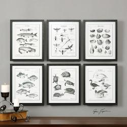 Uttermost Black Science Studies Print Designed By Grace Feyock