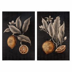 Uttermost Citrus Study Hand Painted Art, S/2
