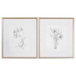 Uttermost Uttermost Botanical Sketches Framed Prints S/2