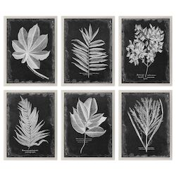 Uttermost Uttermost Foliage Framed Prints, S/6