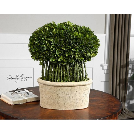 Uttermost Evergreen Preserved Boxwood Willow Topiary Accessory